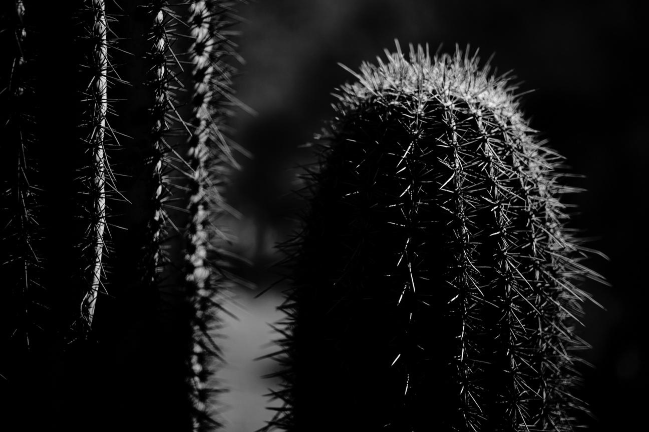 CactusSentinels-23.jpg