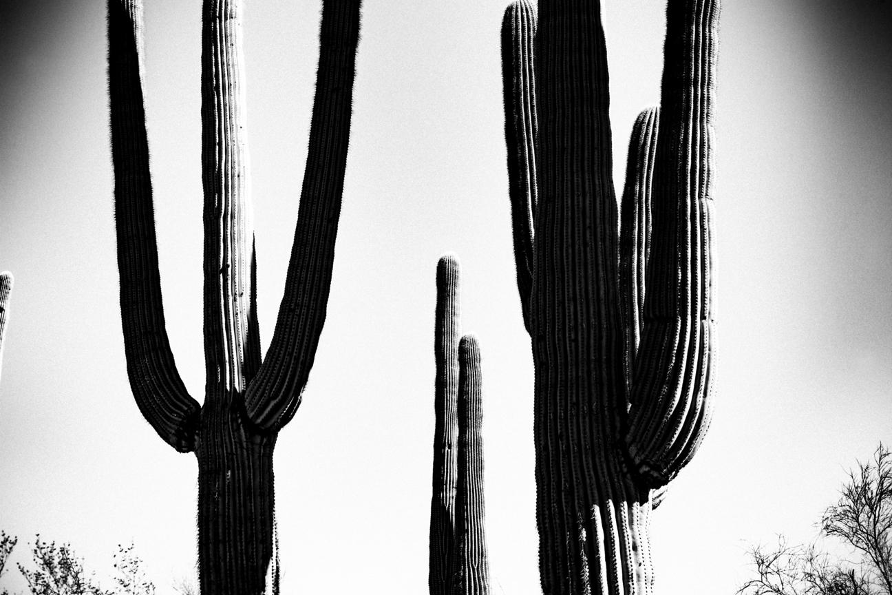 CactusSentinels-28.jpg