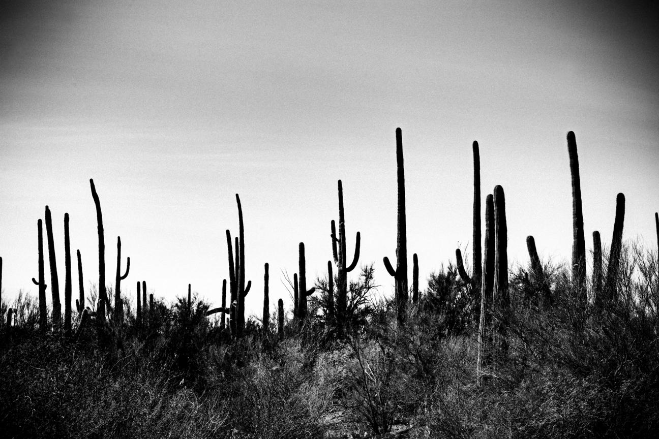CactusSentinels-29.jpg