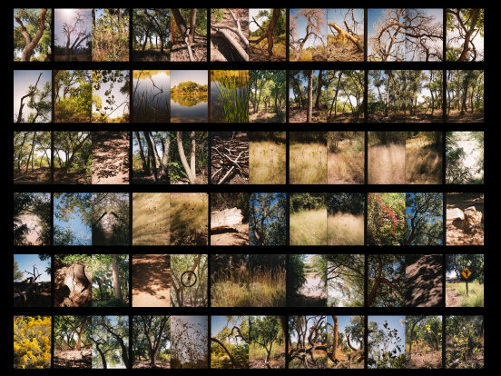 BosqueContactSheet_October2019-1_Blog.jpg