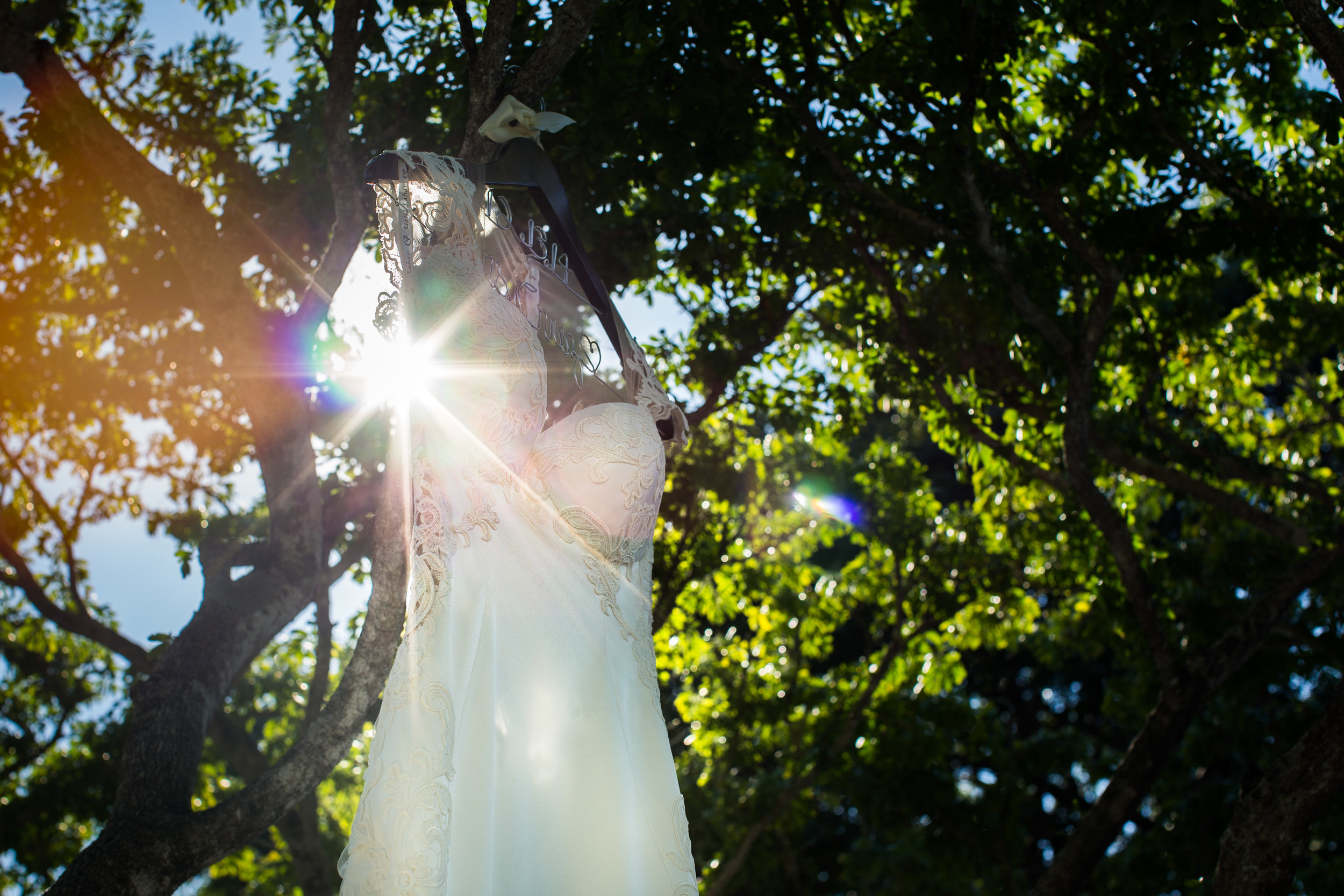 Dress-Hanging-In-Tree-With-Sunburst.jpg