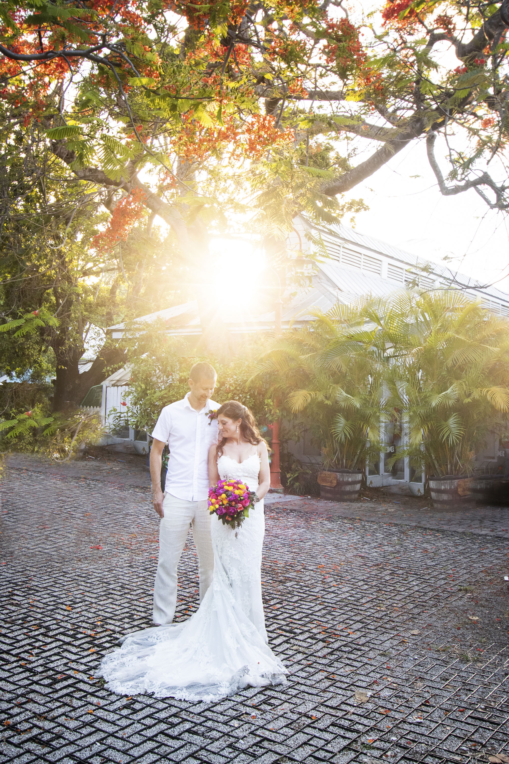 The Glow of the Key West sunset behind a poinciana tree for a married couple