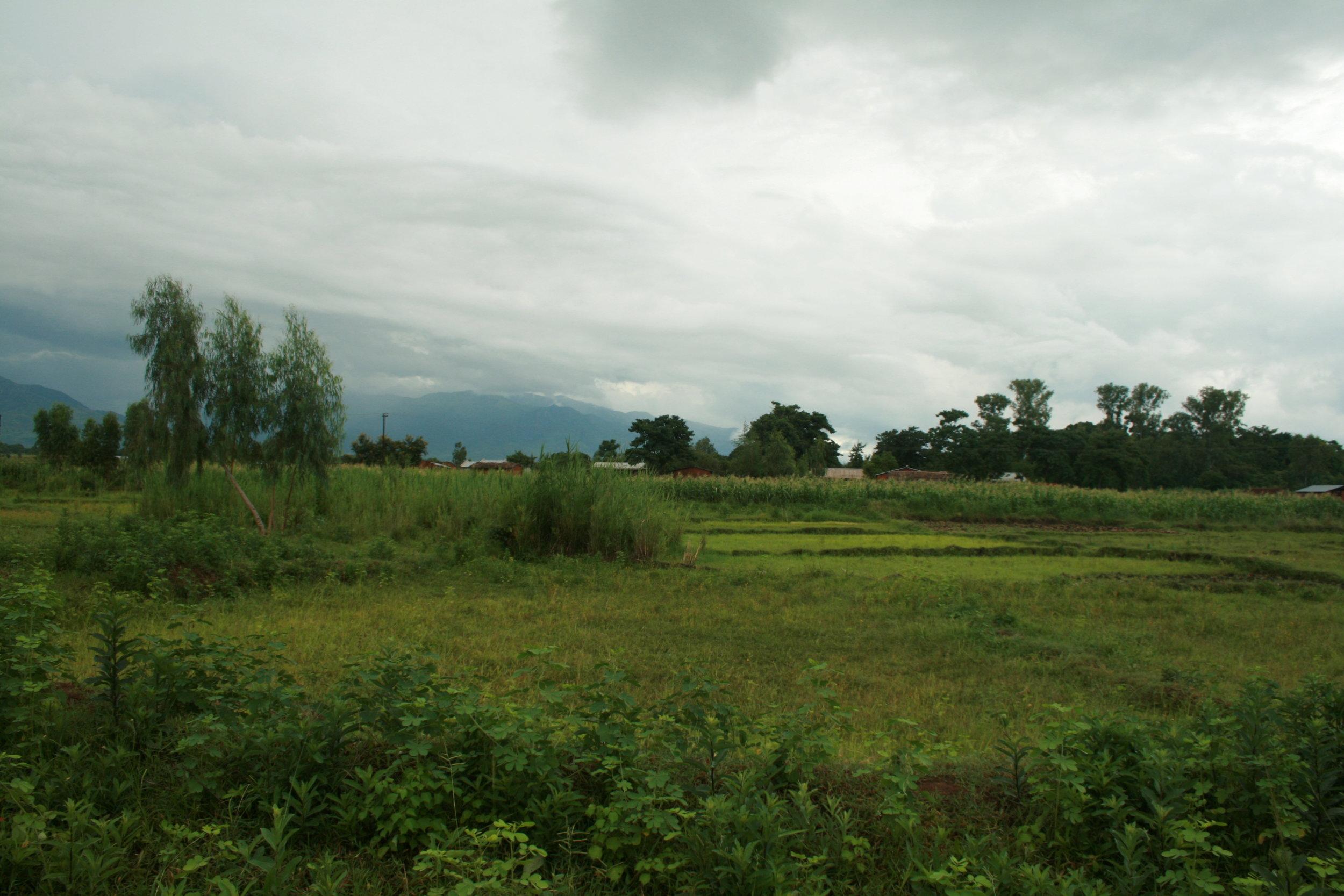 A field near Nsondole.