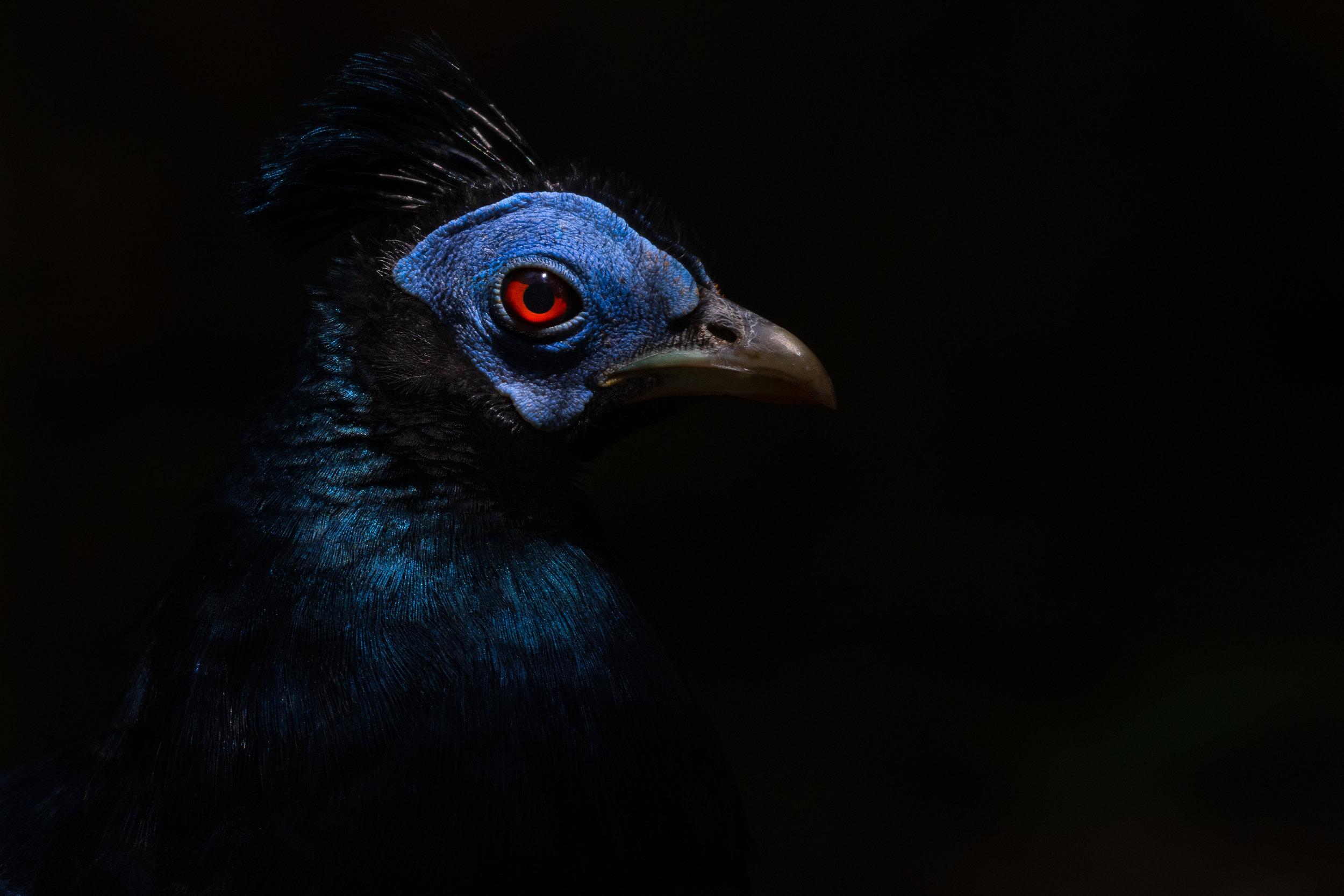 bird_001 (1 of 1).jpg