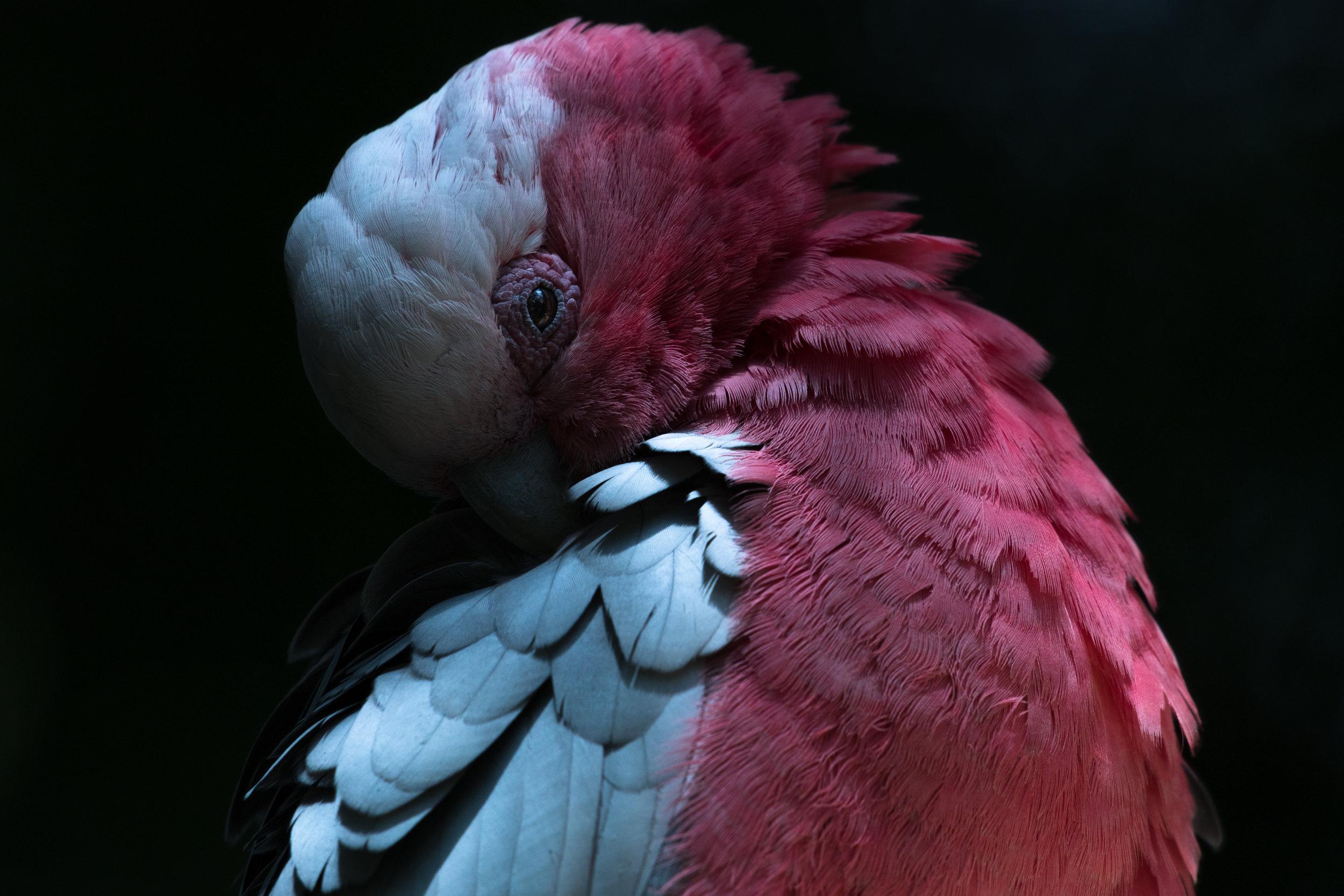 bird_09 (1 of 1).jpg