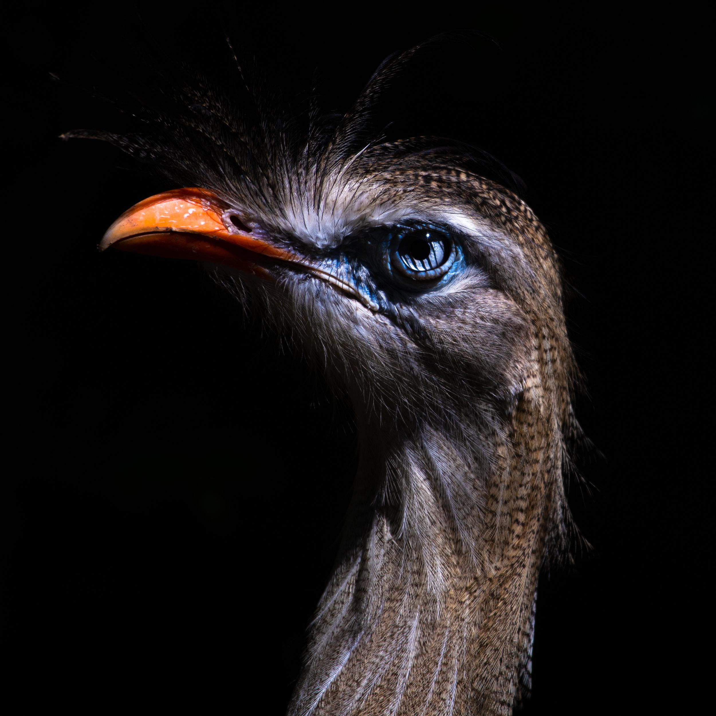 bird_light_001 (1 of 1).jpg
