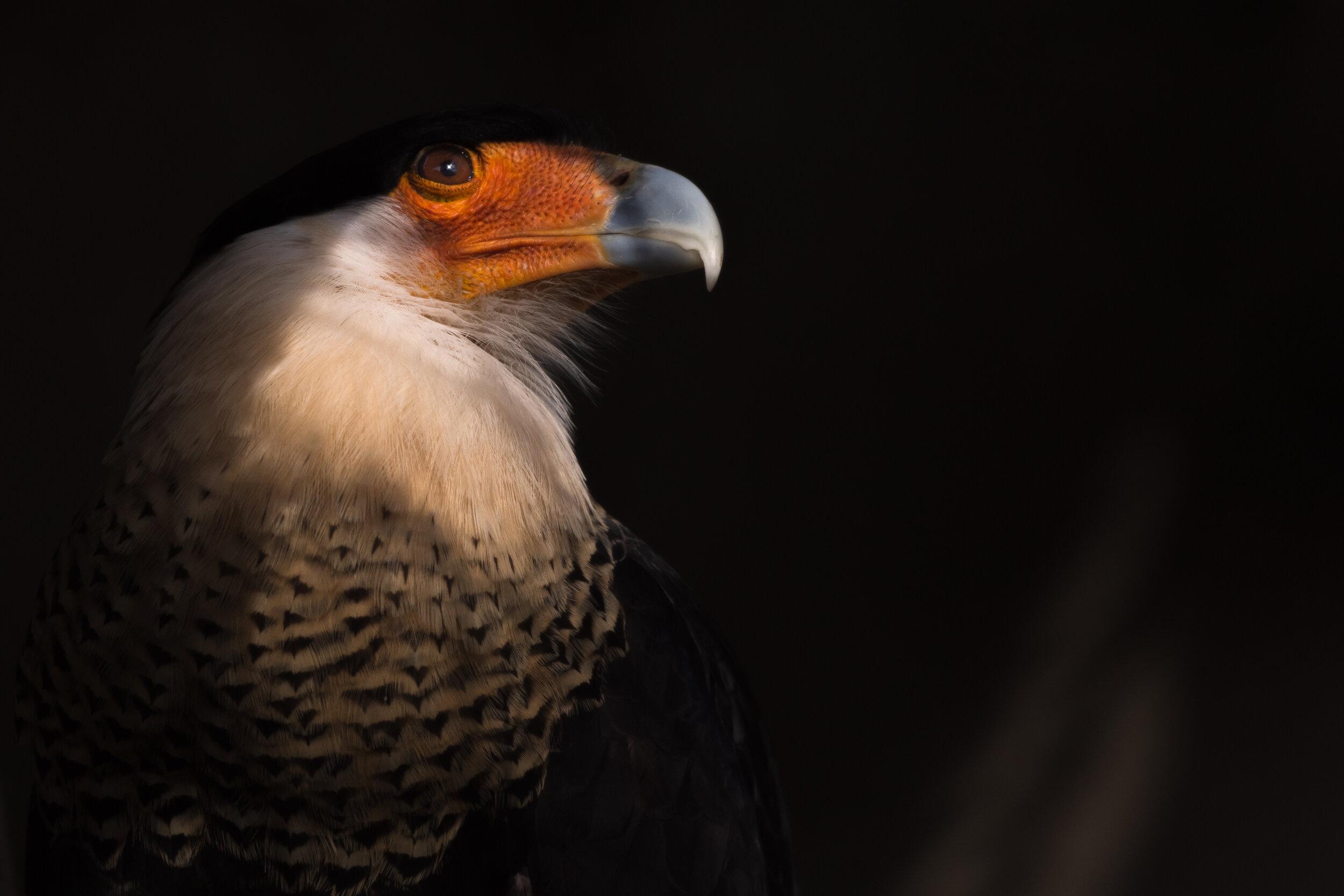 bird_light03 (1 of 1).jpg