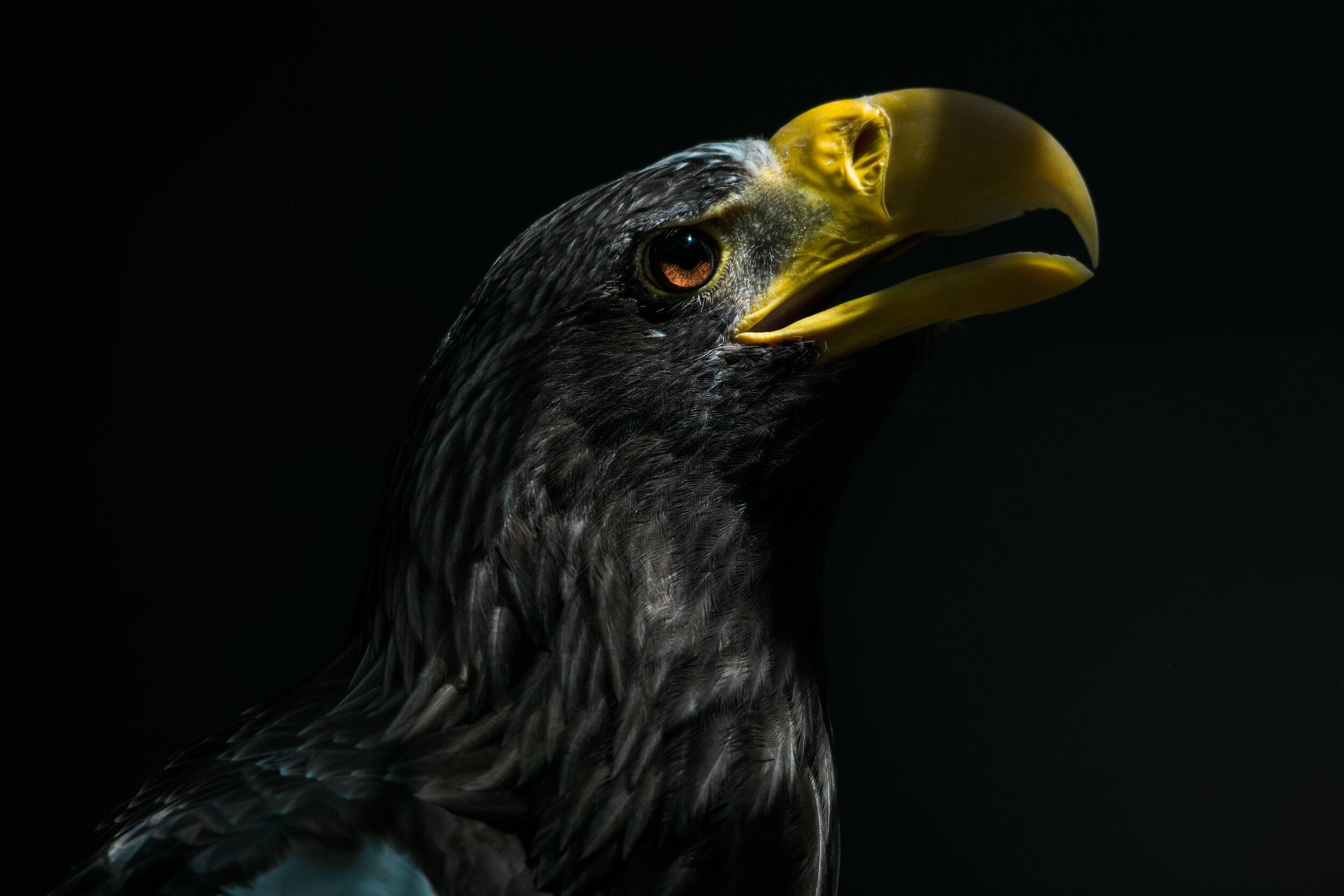stellar_bird.jpg
