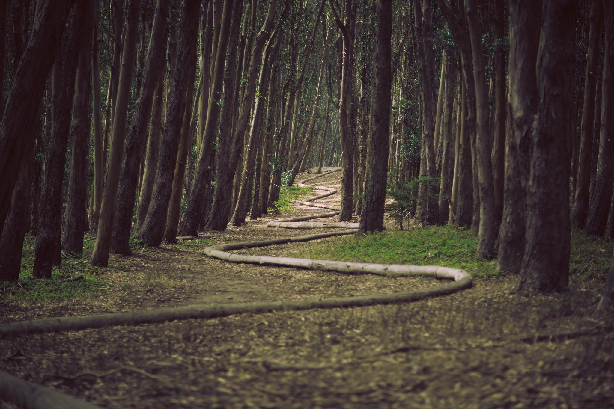 Finding your Path