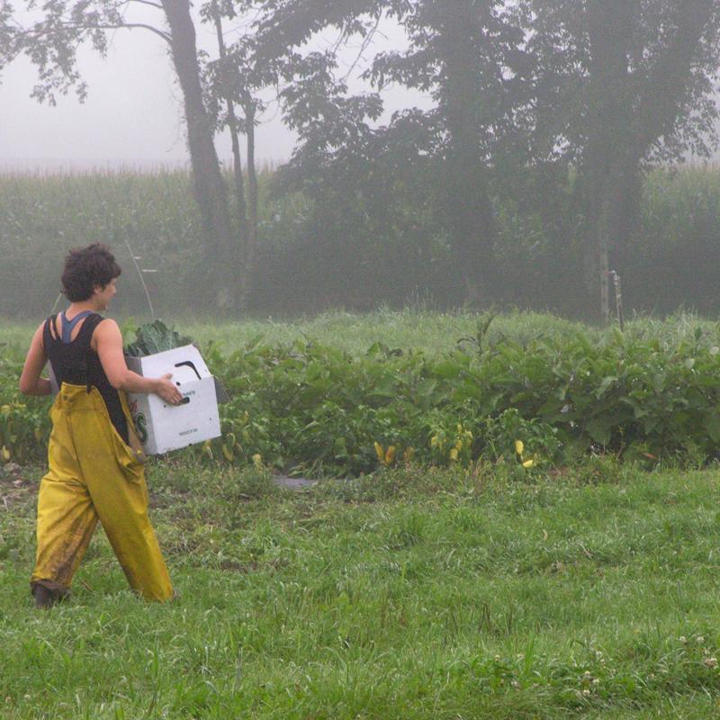 INDIAN LINE FARM