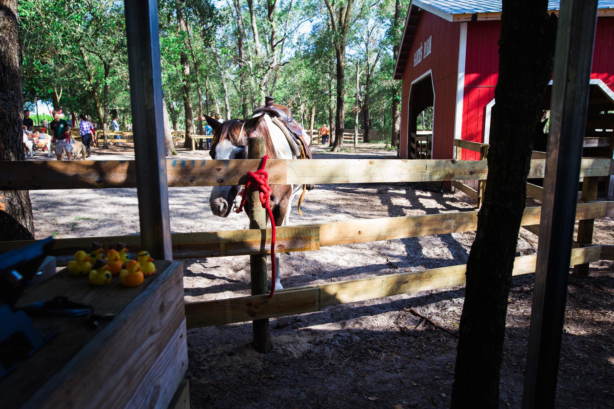 santa's tree farm, eustis florida