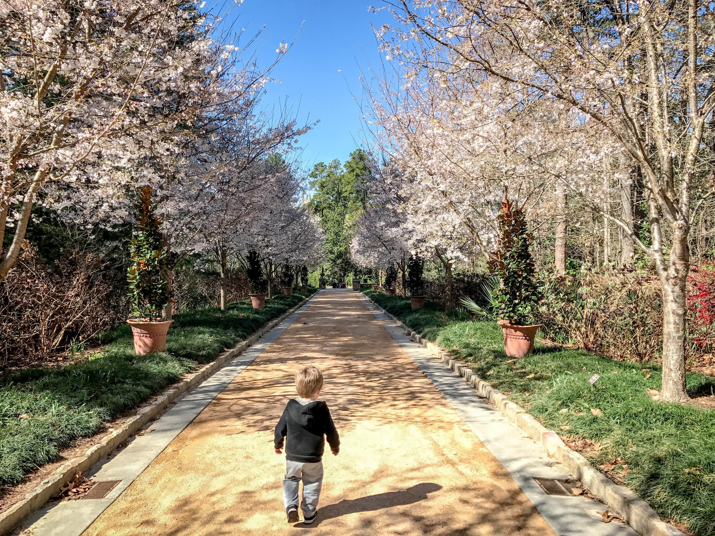 Max at the Duke Gardens entrance.
