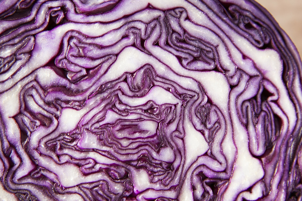 red-cabbage-73364_1280