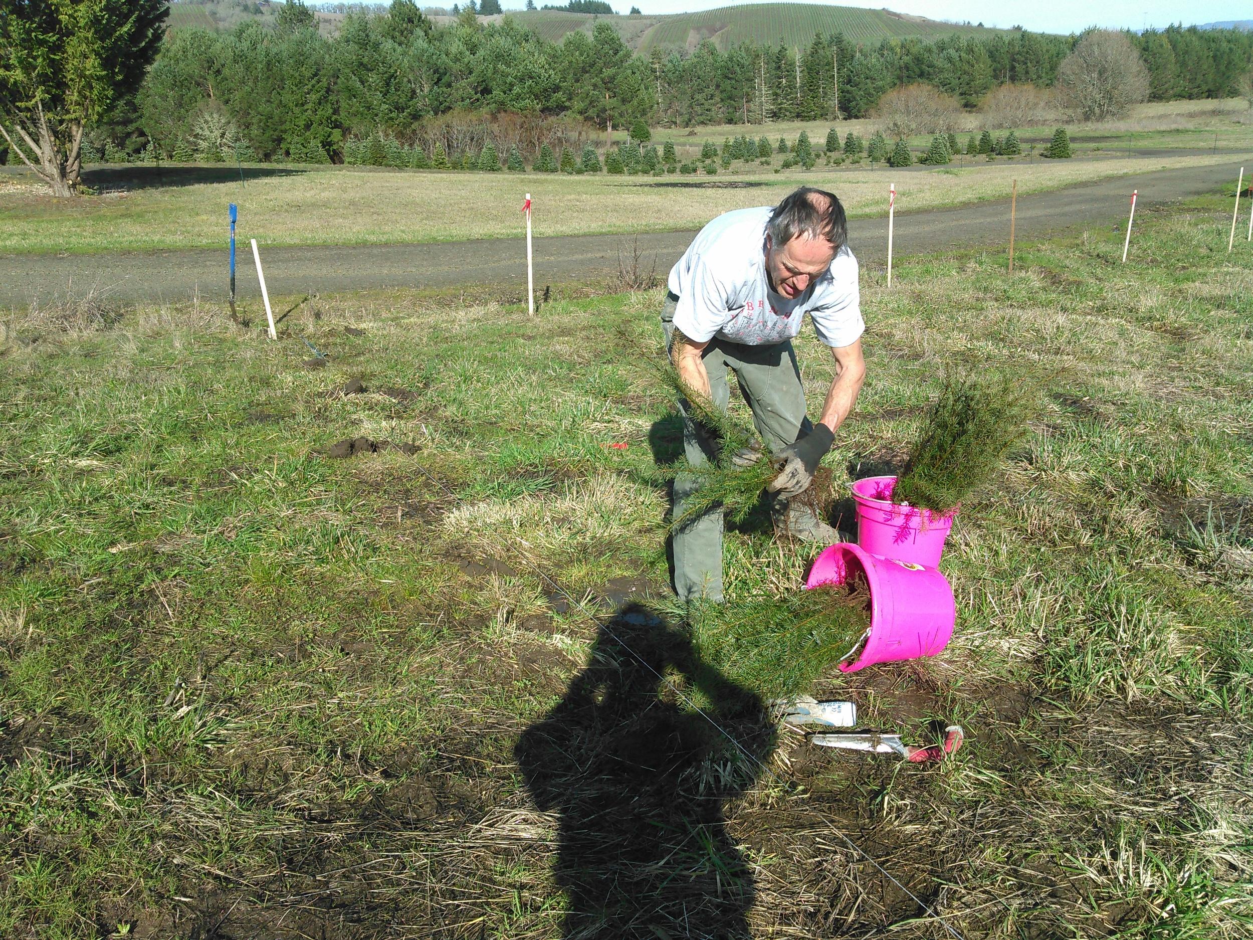 Replanting seedlings, Feb 2016.