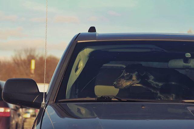 Waiting. . . . . . . #dog #dogsofinstagram #dogs #instadog #perro #perros #perrofiel #fiel #lealtad #loyalty #bestfriend #ilovedogs #waiting #cutedogs #parkinglot #instagram #doggy #snoopdogg #dobberman #mix #breed