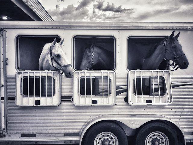 B&W . . . . . . . . #blackandwhite #black #white #photography #travelphotography #iphonography #snapseed #horses #horseofinstagram #illinois_shots #illinoisphotography #ontheroad #truckstop #chicagoig #chicagoshot #chicagogram