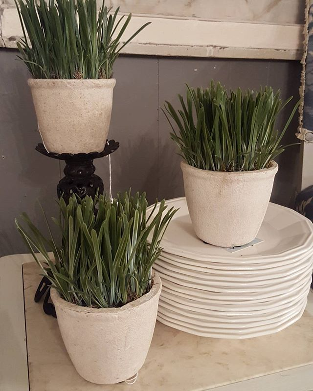 We all could use some green to chase away the winter blues. Come enjoy when we open at 10am Thursday. #ramshackledtreasureszimmermanmn #spring #grass #homedecor #minnesotamade #mnshop #shoplocal