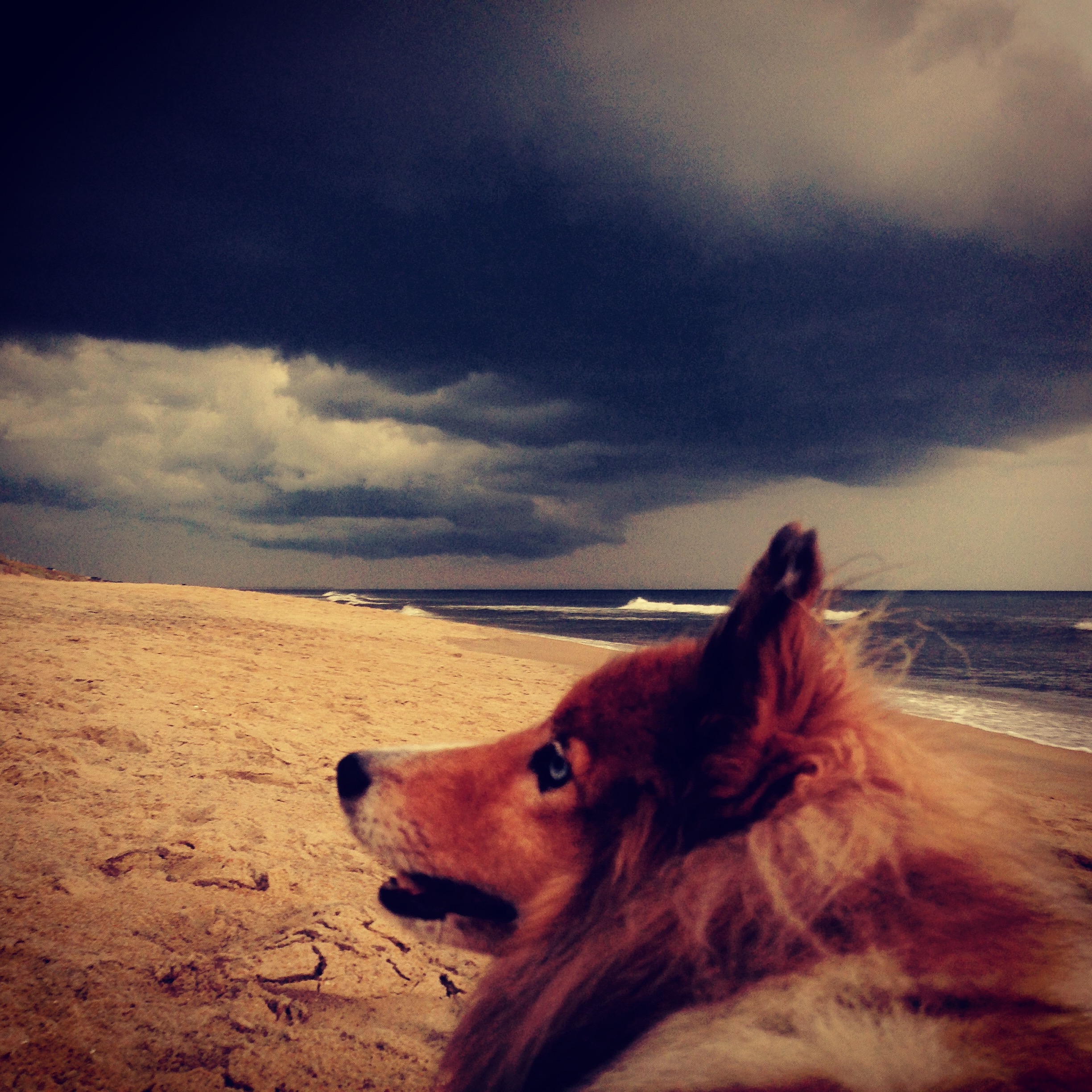Lucky and the storm