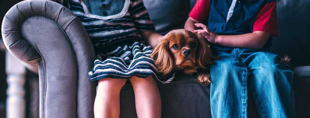 dog-sofa-kids-low-res-1.jpg