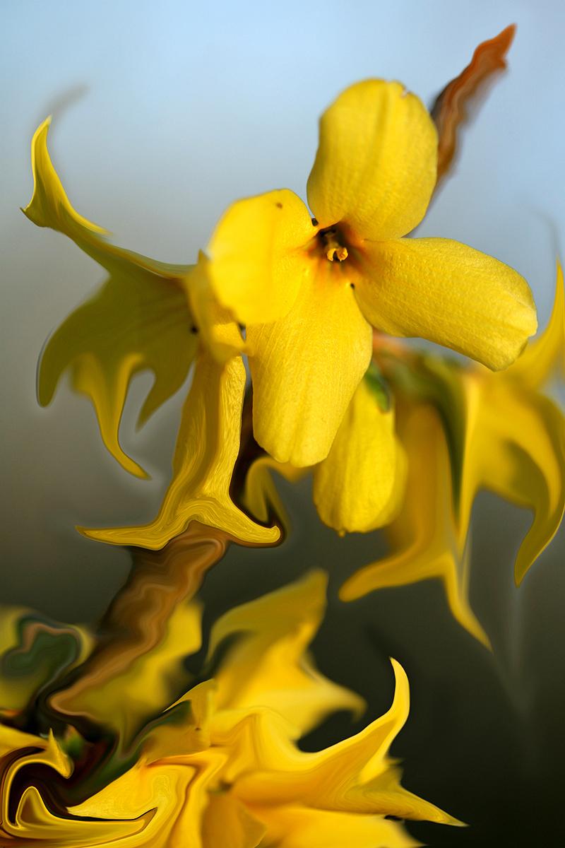 flower_20.jpg