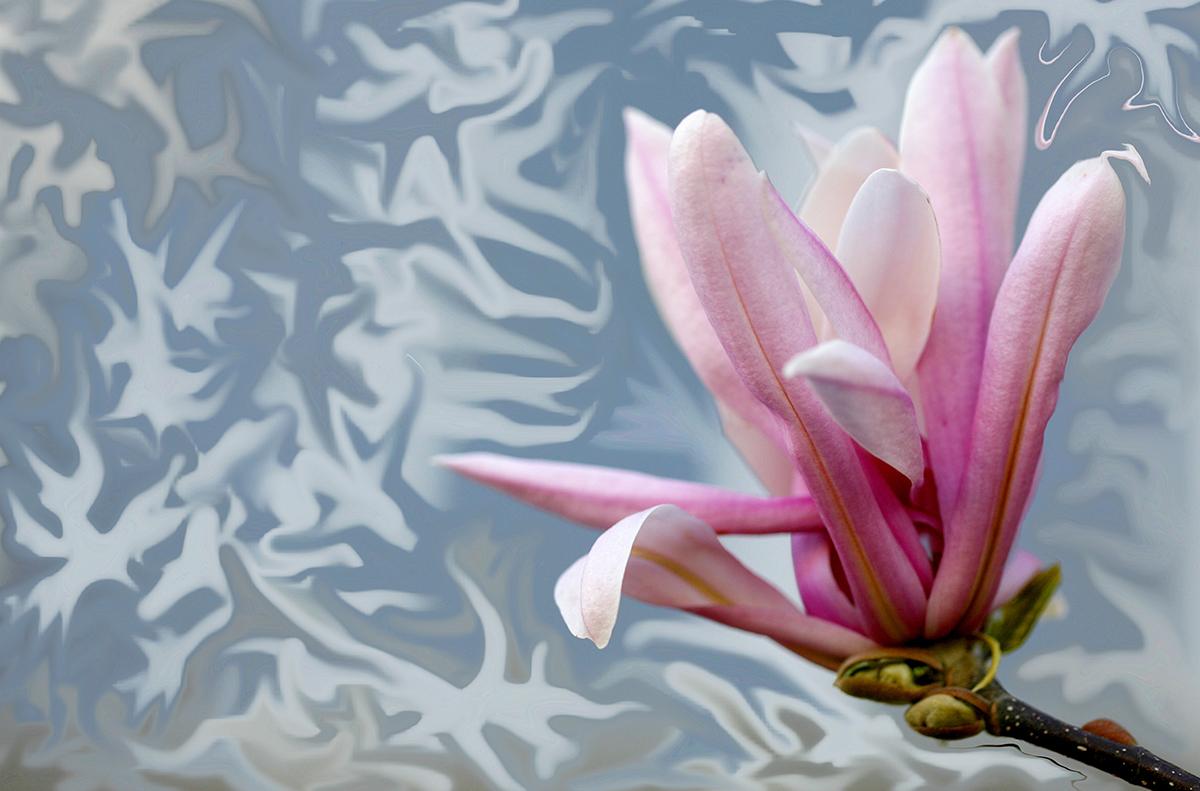 flower_27_25_38.jpg