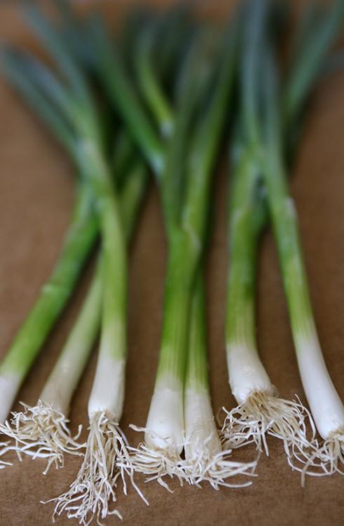 green onion_1_25_38.jpg