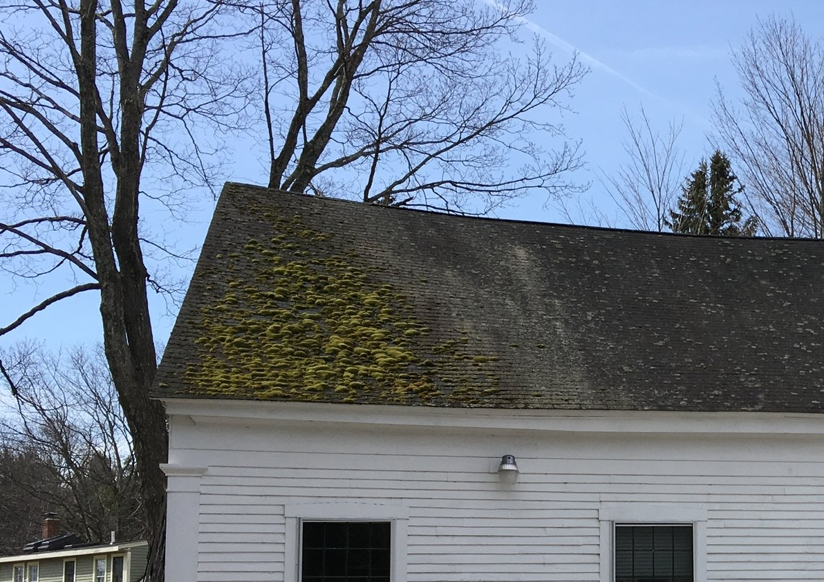 Moss growth on roofs will shorten its lifespan and potentially cause moisture problems.
