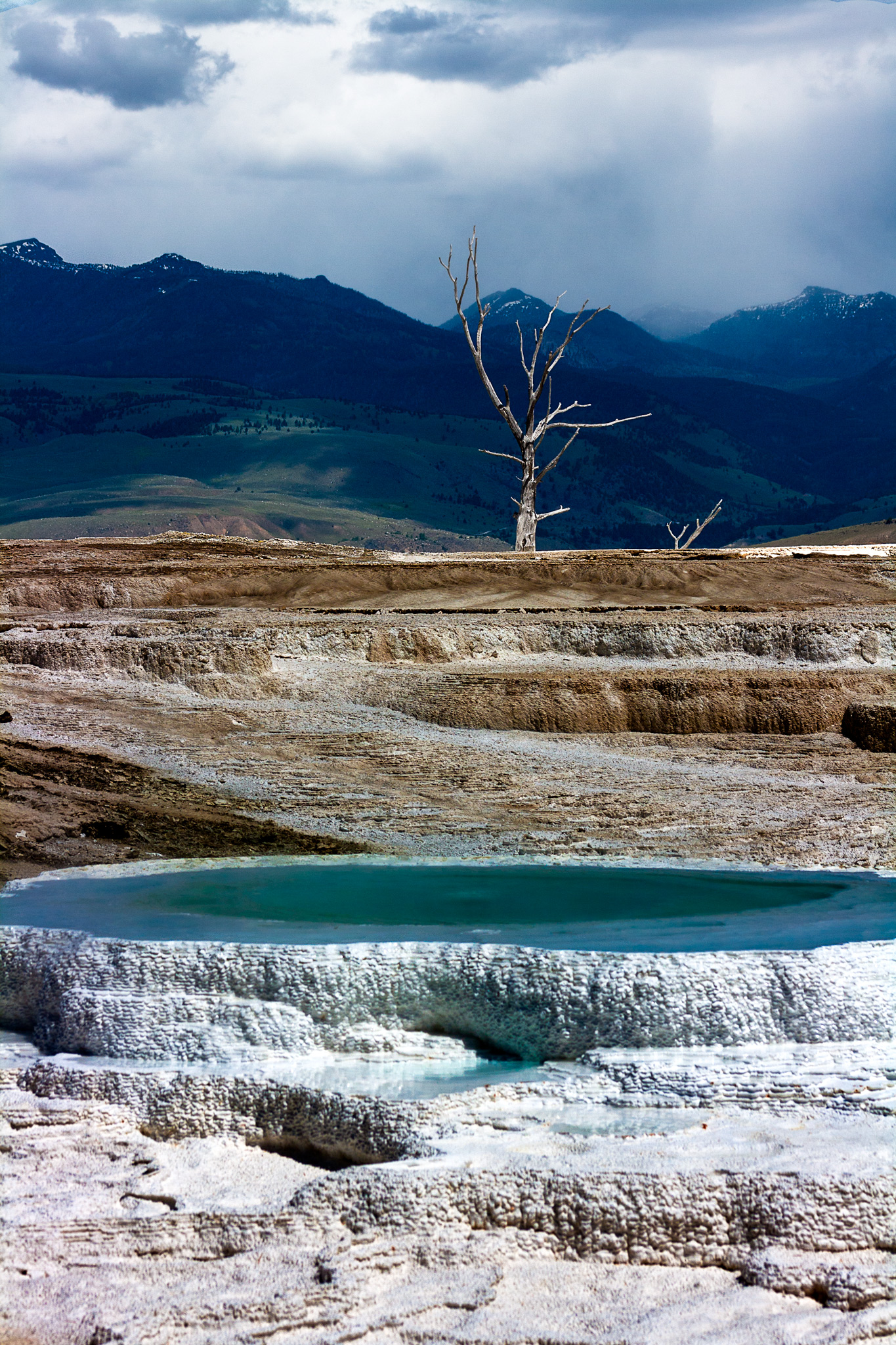 Spring-and-Tree---Yellowstone.jpg