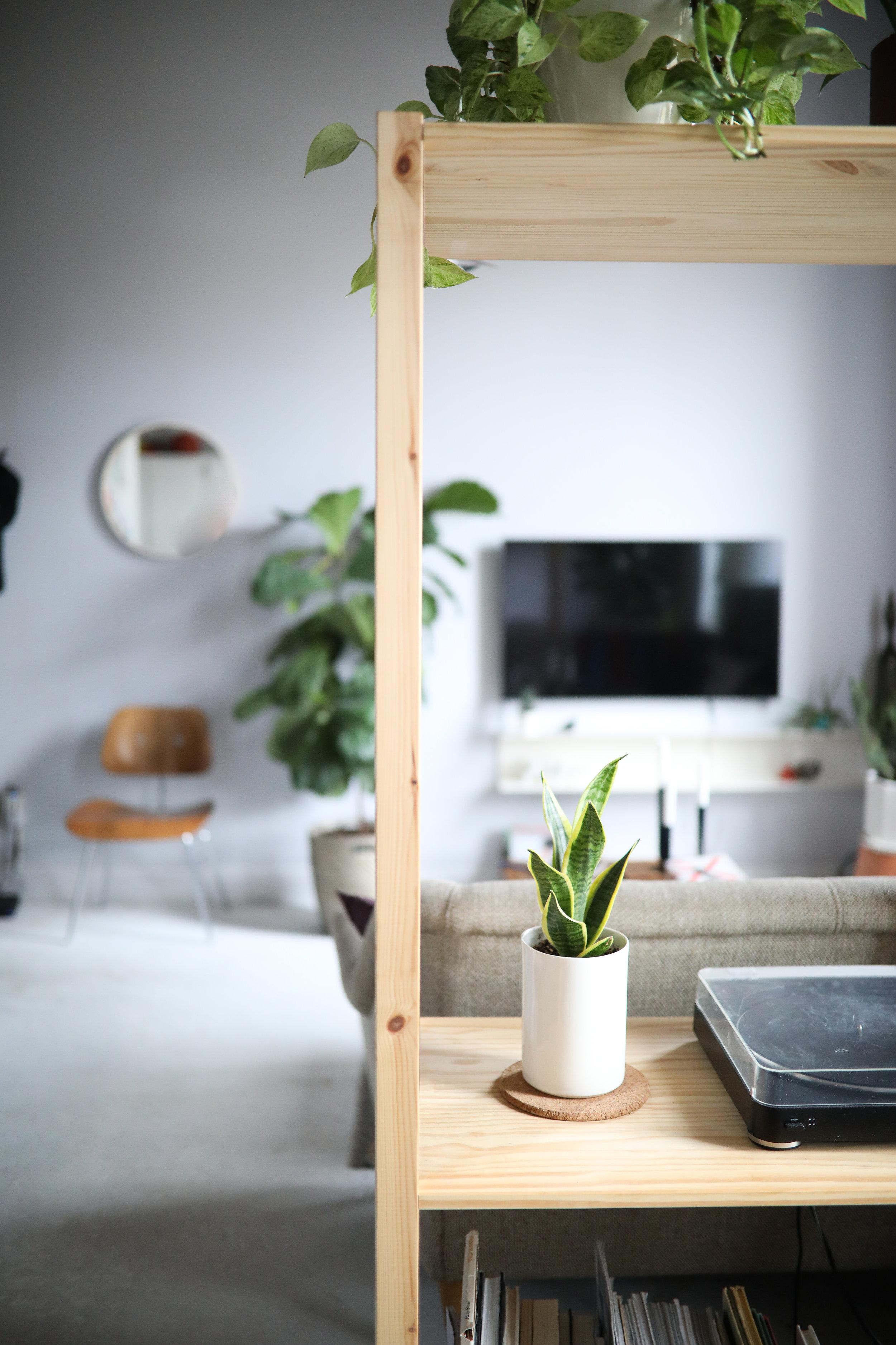 CONVIVIAL -  Large Minimal Vase  w/ Sansaveria Plant