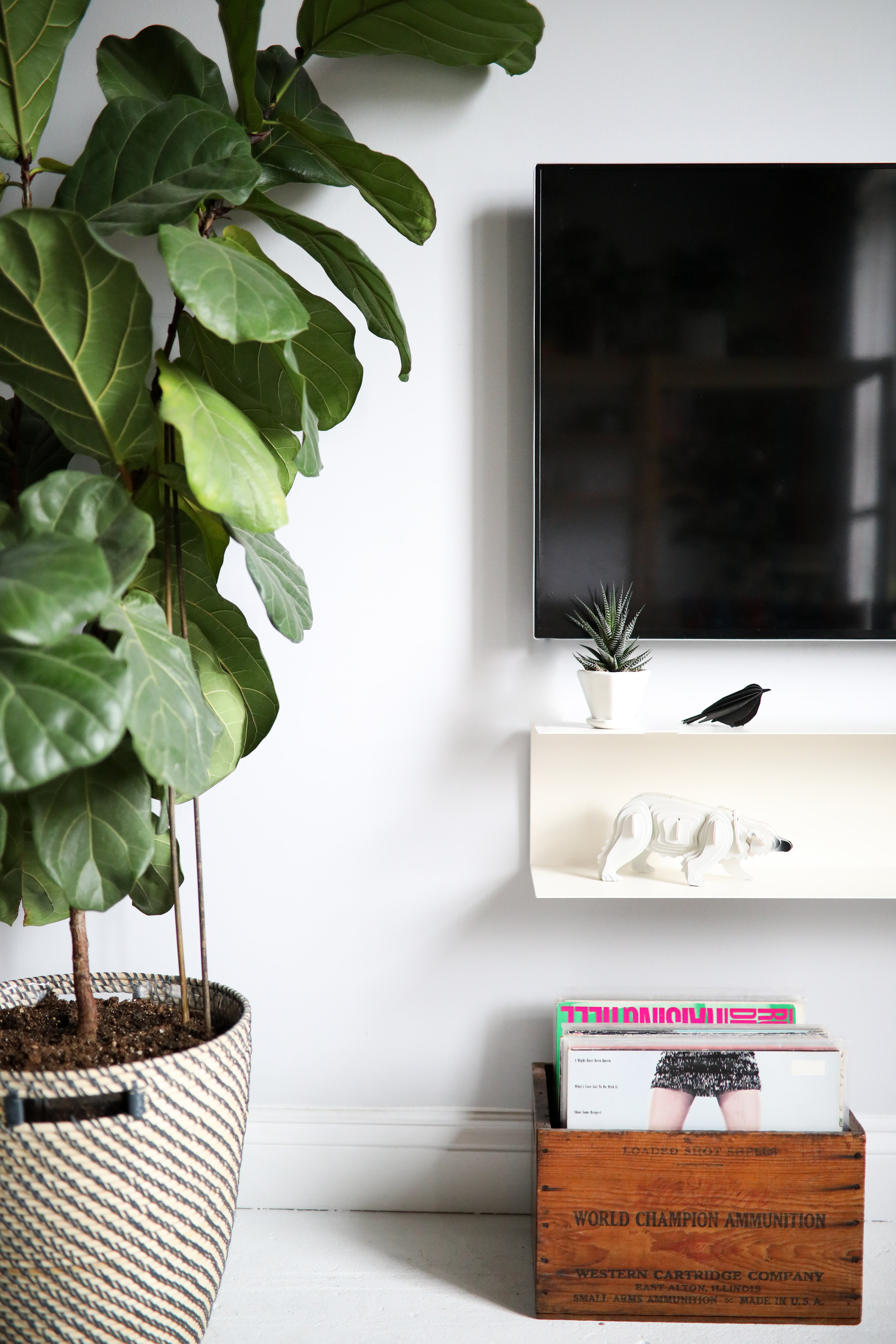 CONVIVIAL -  Mini Octagon Planter  w/ Zebra Haworthia