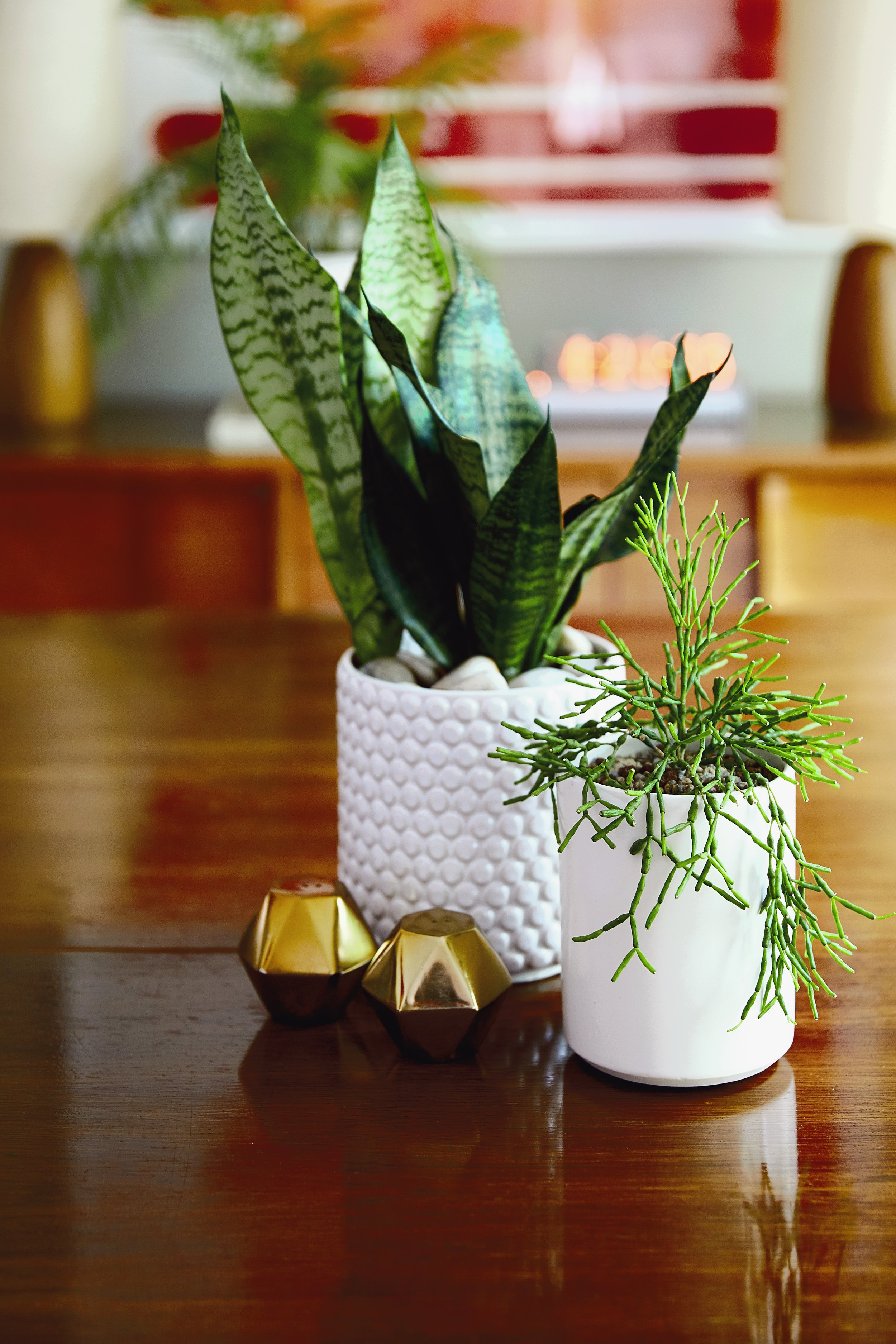 CONVIVIAL -  Medium Minimal Vase