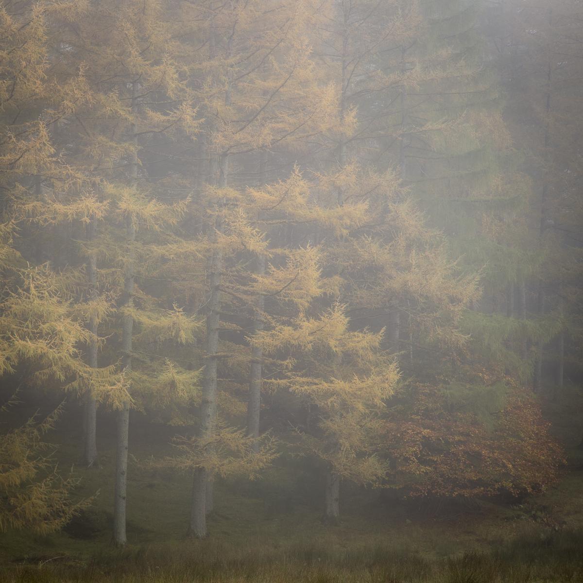 Sam_Landscape3.jpg