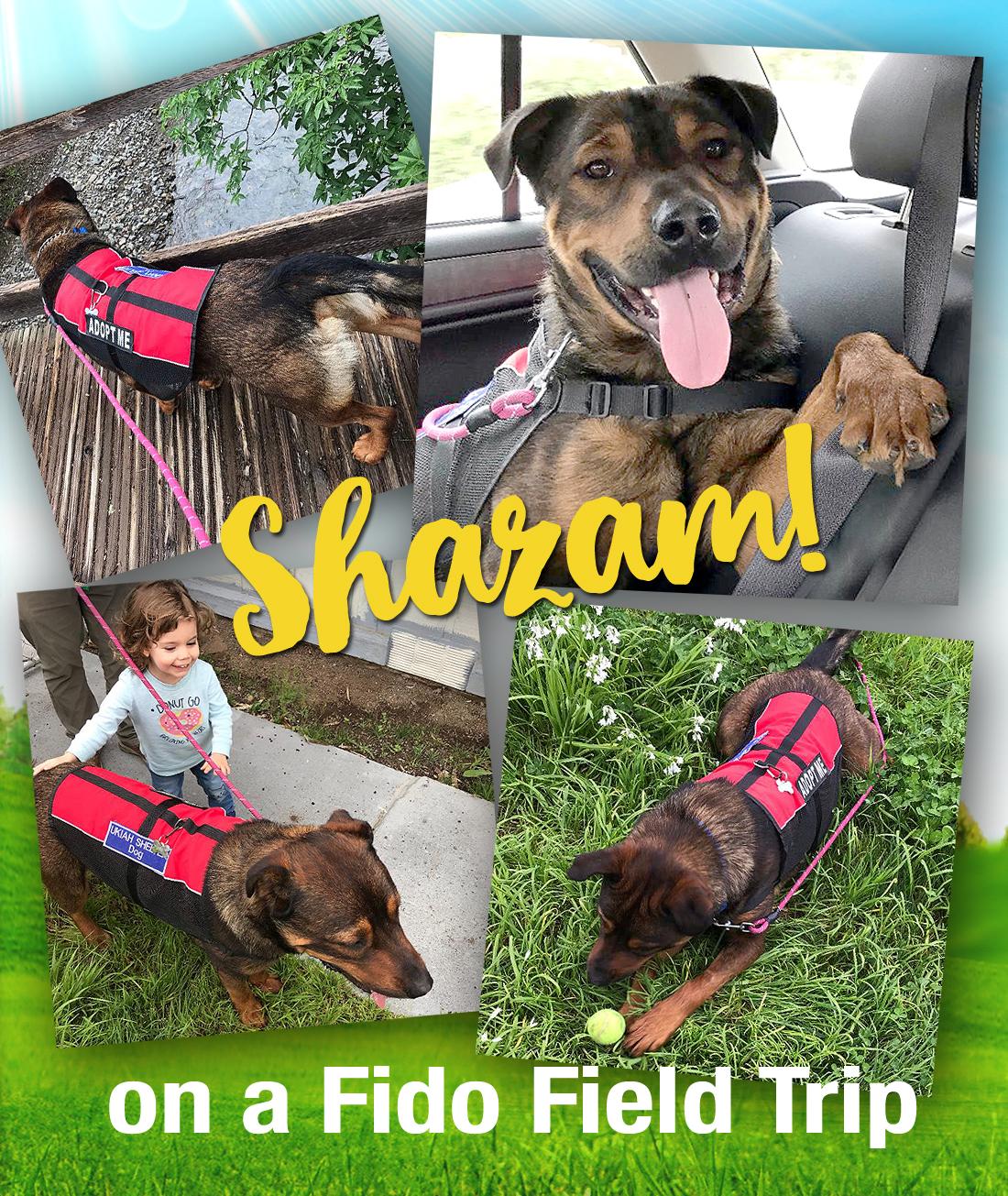 shazam-on-a-field-trip.jpg
