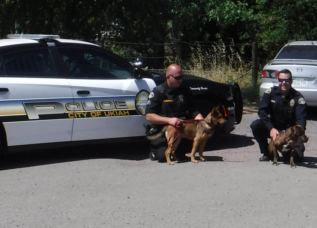 On Take You Dog to Work Day Jo-Jo, who was a tad camera shy, took a walk with her new friend London.. They walked over for a photo opportunity with some Ukiah Police staff. Then the two new friends went for a stroll together. This is a FIRST for Jo Jo!!