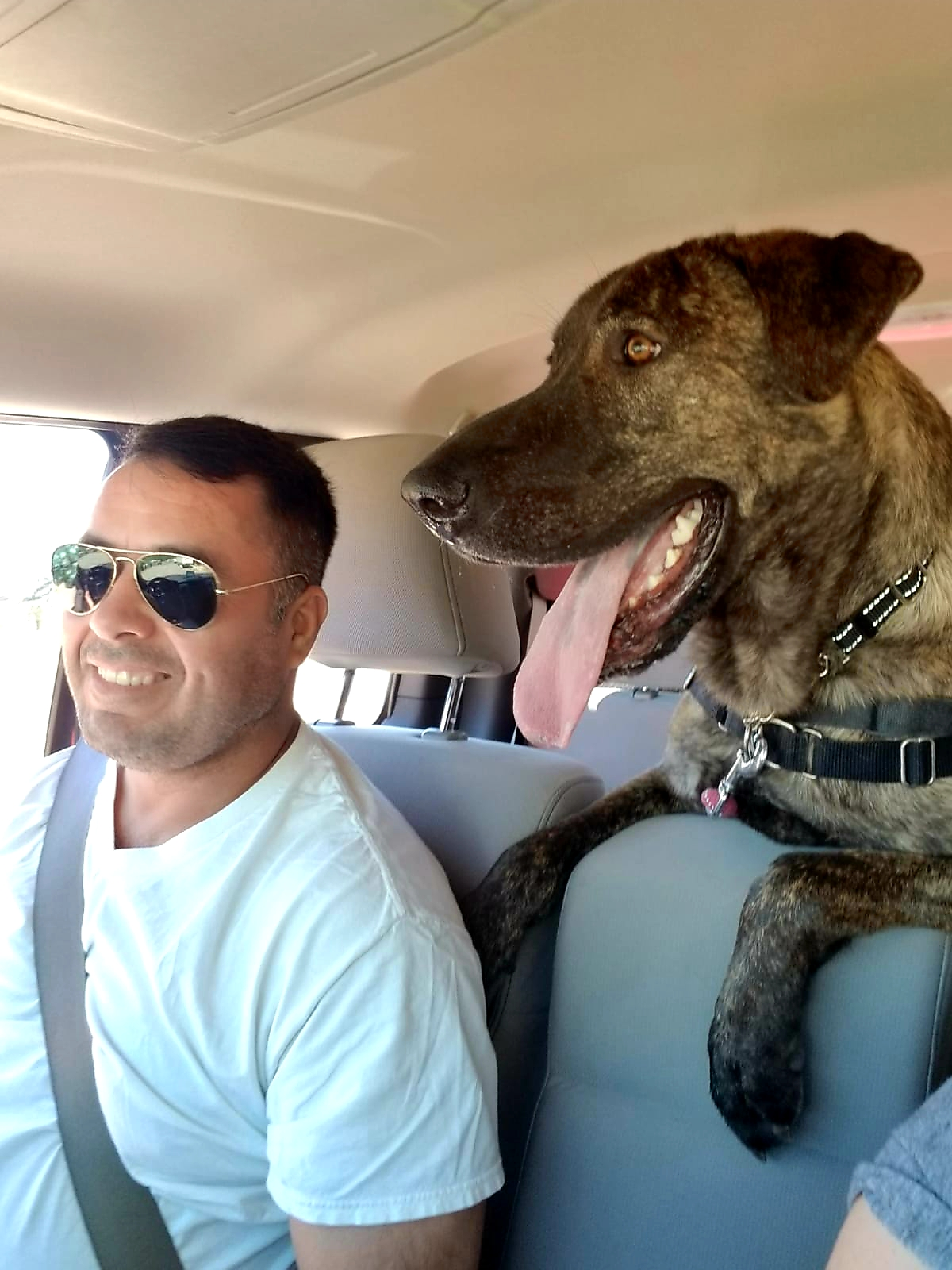 Juice starts his day adventure on a Fido Field Trip. Who looks happier Juice or his human companion?