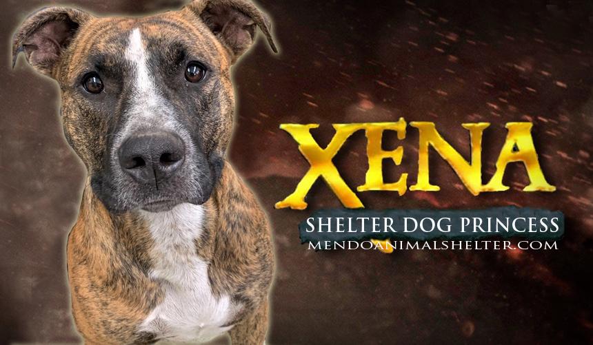 xena-photoshopped.jpg