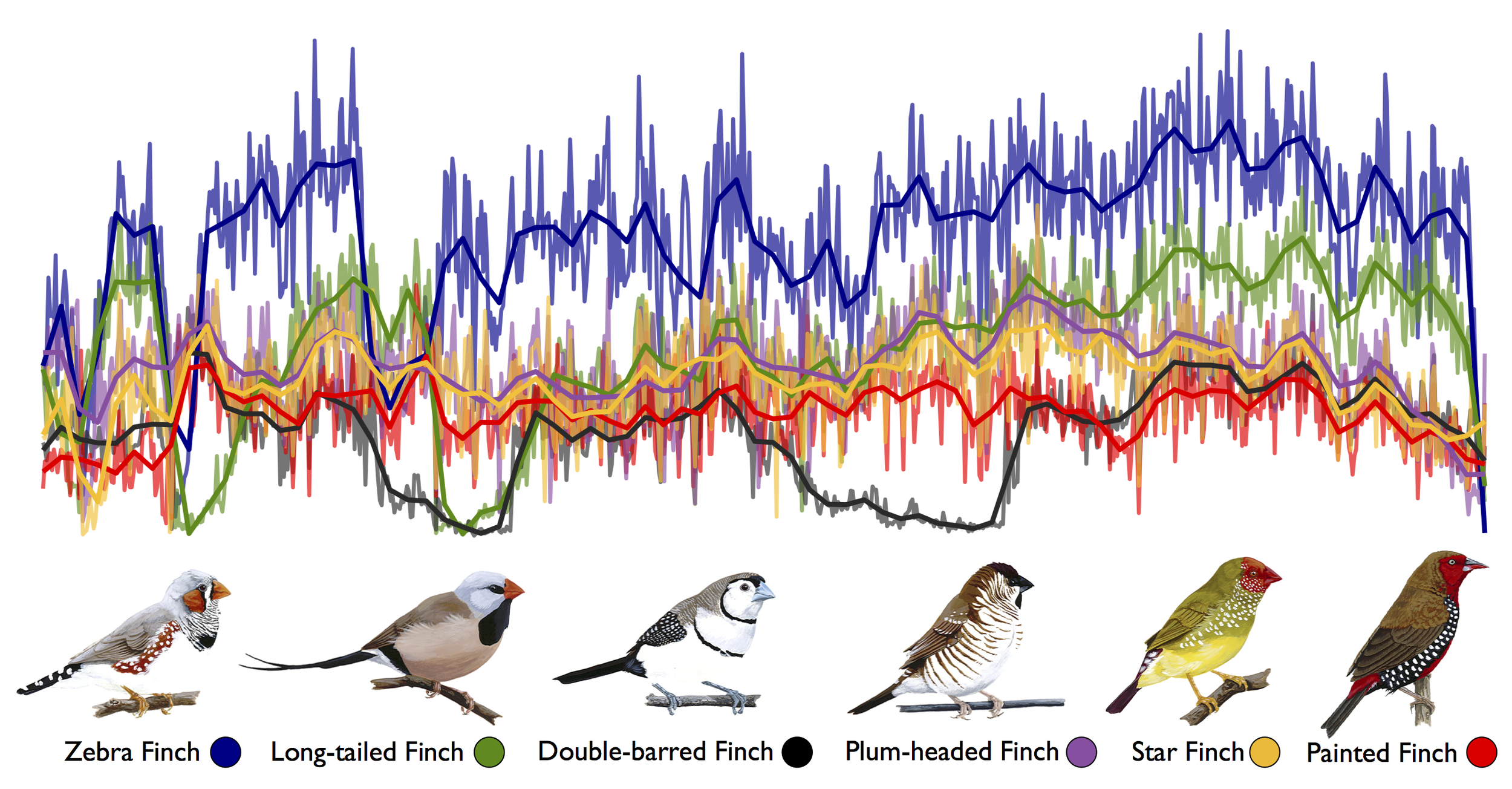 Nucleotide diversity in 50kb sliding windows along chromosome 7 for six species of Estrildid finches