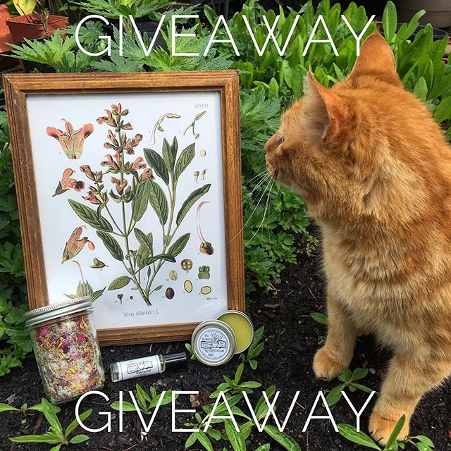 Giveaway!!! Cat not included.  We're doing a spring giveaway featuring the FOUR items pictured from our current collection. These 4 items are a $80 value, FREE to ONE lucky winner.  To ENTER the drawing follow the below steps: 1. Make sure you're following our account and like this post 2. Comment on this post and tag a friend.  The winner will be chosen on April 29th at 12:00PM PST. Thanks for participating and GOOD LUCK! -Relaxing Magic Bath Tea -Lavender Dream Magic Roller -Lavender Honey Magic Salve -Framed Sage Botanical Print  We can only ship to the US & Canada  #giveaway #fiveelementsapothecary  #contest #giveawaycontest  #contests #contestalert #contestentry #sweepstakes #herbalism #skincaregiveaway #giveaways #winitwednesday #competition #win #organicskincareproducts #clothinggiveaway #giveawaytime #witchythings #witchesofinstagram #wiccan #witchcraft #witchaesthetic #wicca #freegiveaway #mothernature #magic #skincareproducts #herbalist #naturalskincare #naturalskincareproducts
