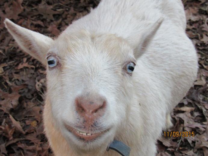 Lambie Nov 2015