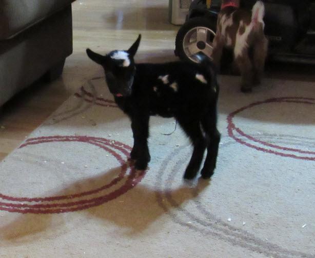 1 week old