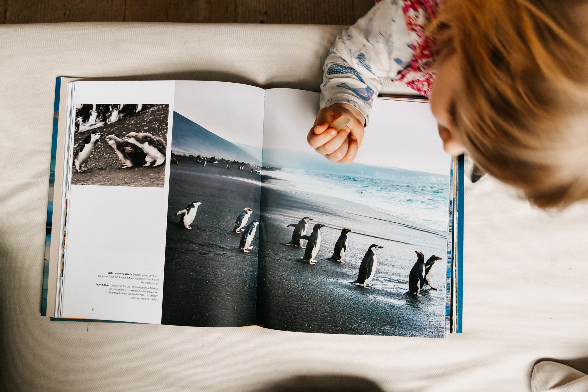 Little Girls looks at photo book with penguins