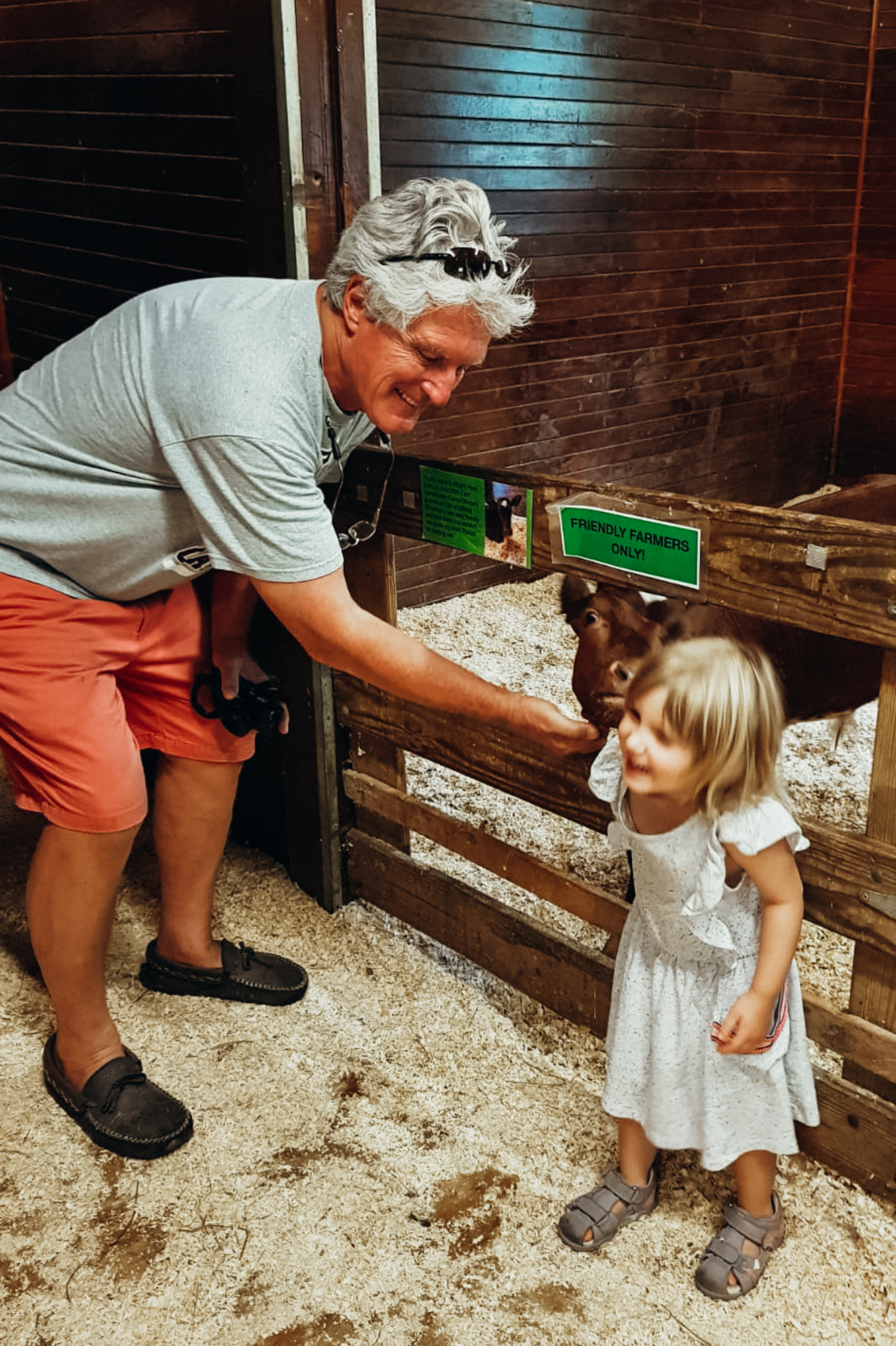 A grandfather feeds a baby goat with his granddaughter, New Hampshire.