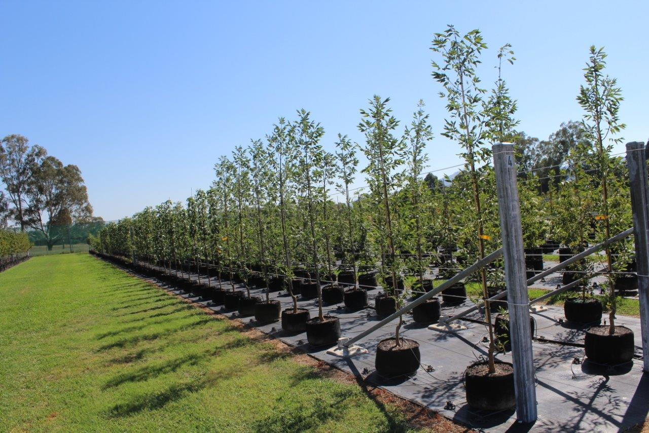 High quality stock matched to your project   Quality systems and advanced growing methods    Find Out More