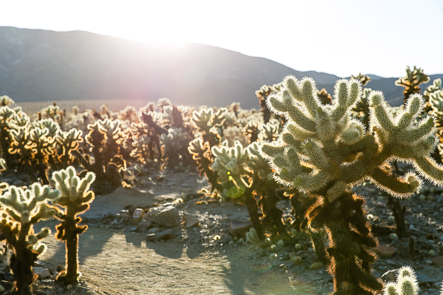 Joshua Tree National Park, California © Kat Molesworth (8).jpg