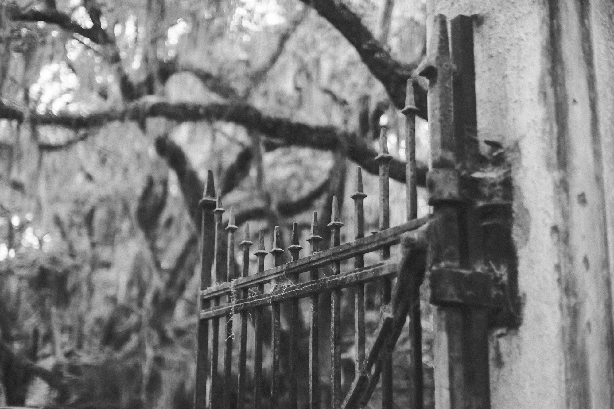 Savannah Georgia - Wormsloe - DiBlasio Photo-0055.jpg