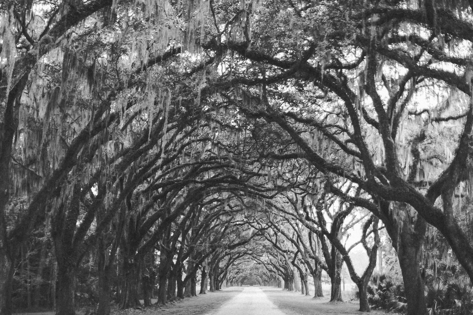Savannah Georgia - Wormsloe - DiBlasio Photo-0106.jpg