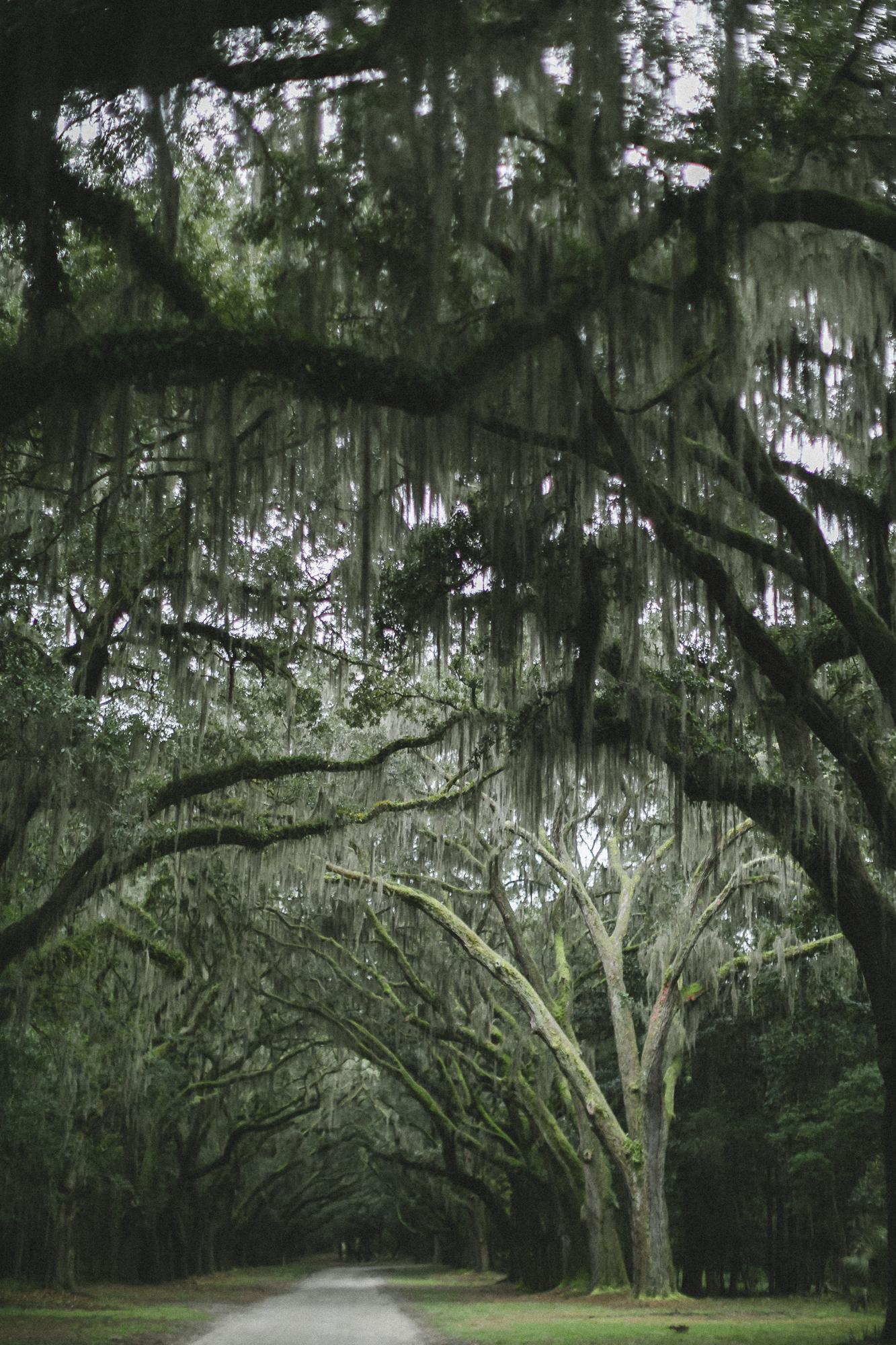Savannah Georgia - Wormsloe - DiBlasio Photo-0116.jpg