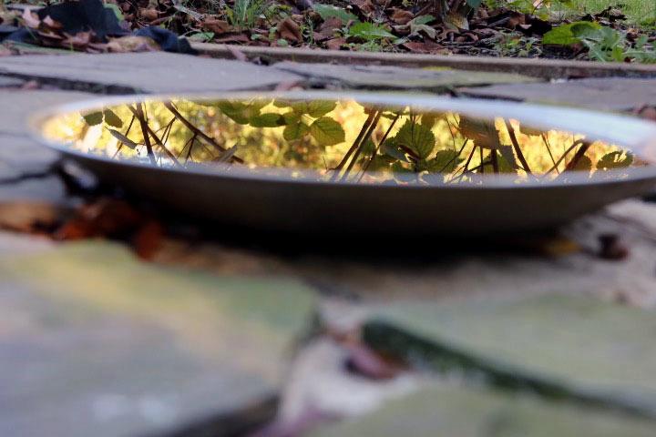 dish-reflection-2.jpg