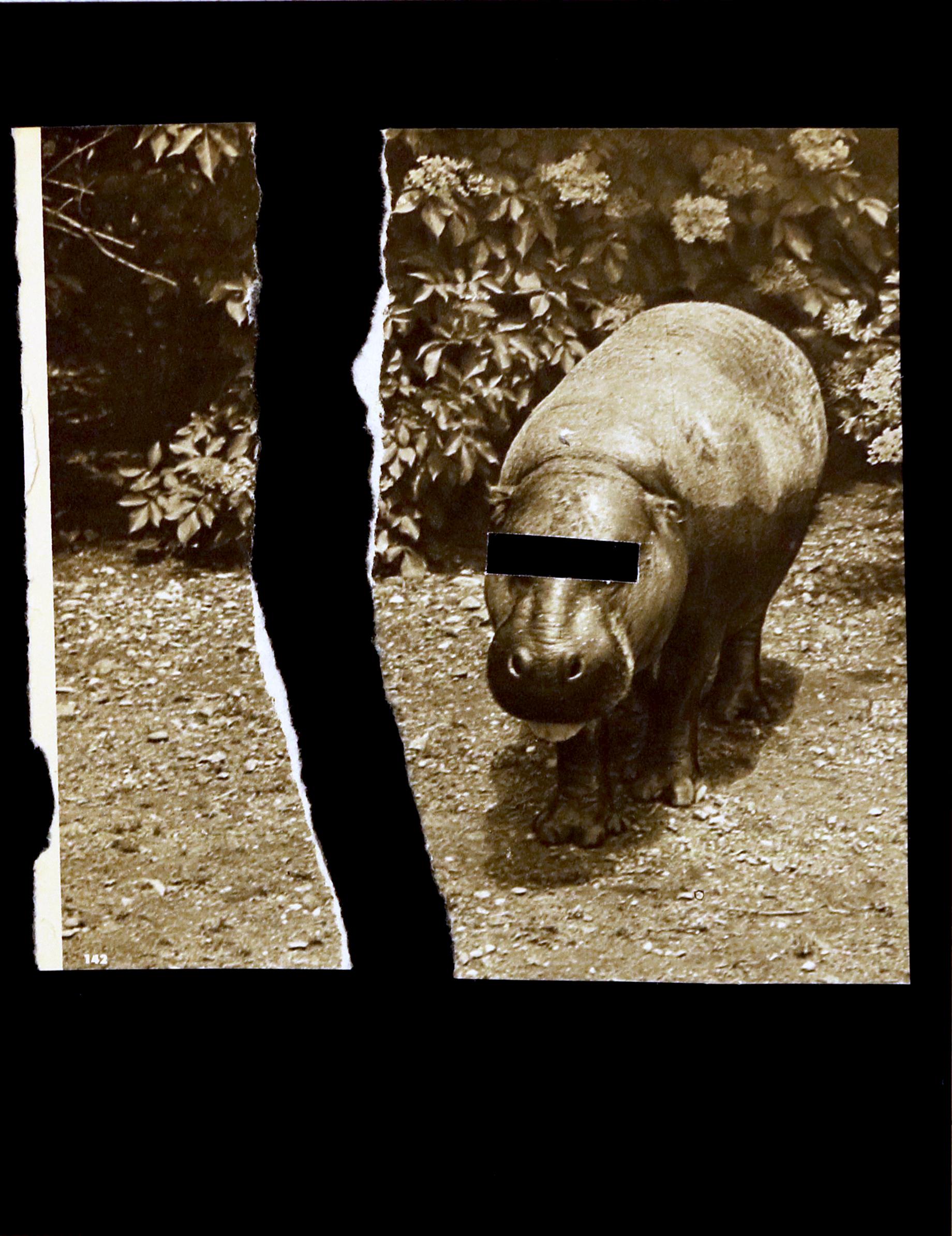 hippo1.jpg