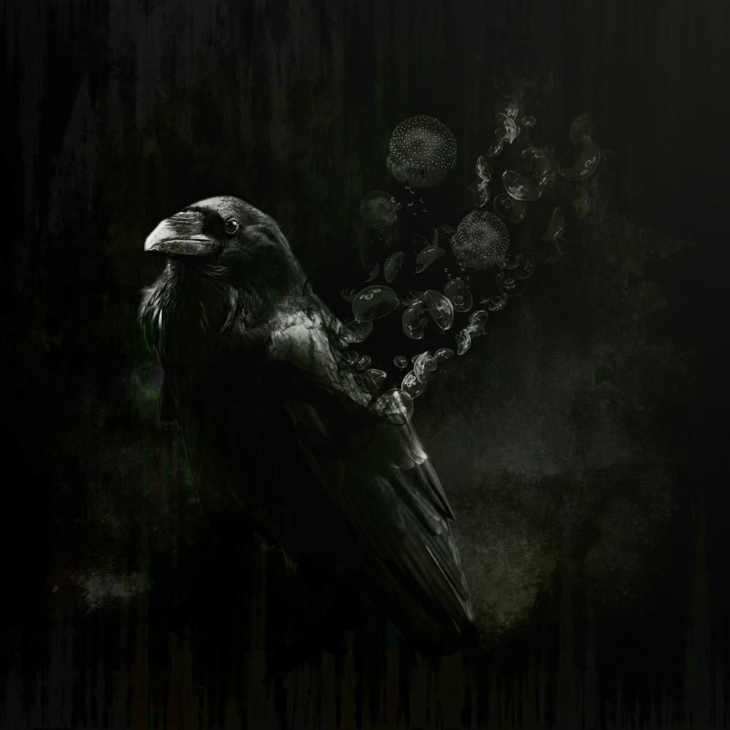crow1jpg.jpg